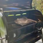 Lachsforelle vom SmokeFire